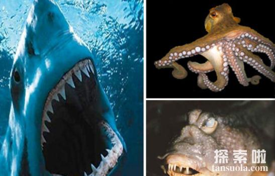 世界上最大的门牙,长2.28厘米,宽1.2厘米(图1)