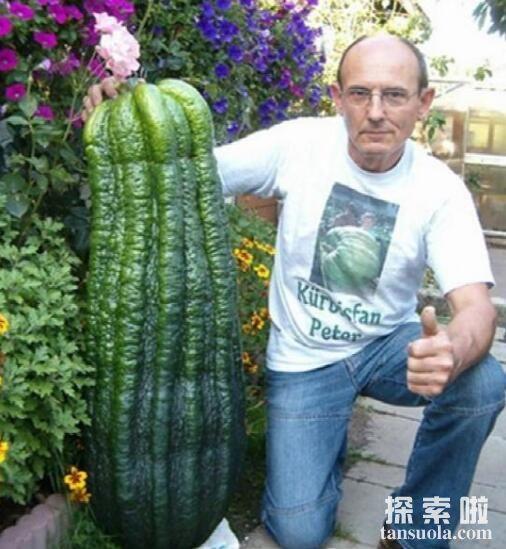 世界上最大的西葫芦,重达65公斤,两个人才能抬得动(图2)