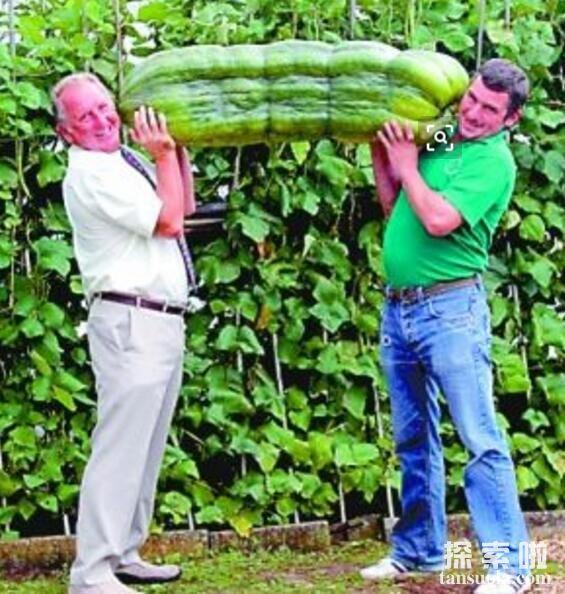 世界上最大的西葫芦,重达65公斤,两个人才能抬得动(图3)