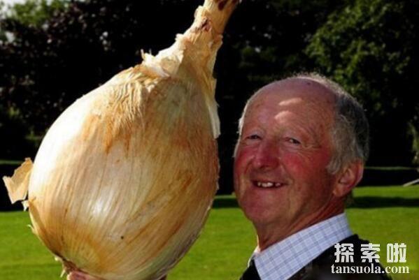 世界上最大的洋葱,8公斤重的巨型洋葱(打破世界纪录)