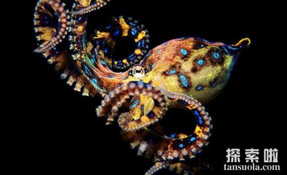 世界上最毒的章鱼:蓝环章鱼,被它咬伤必死无疑(图5)