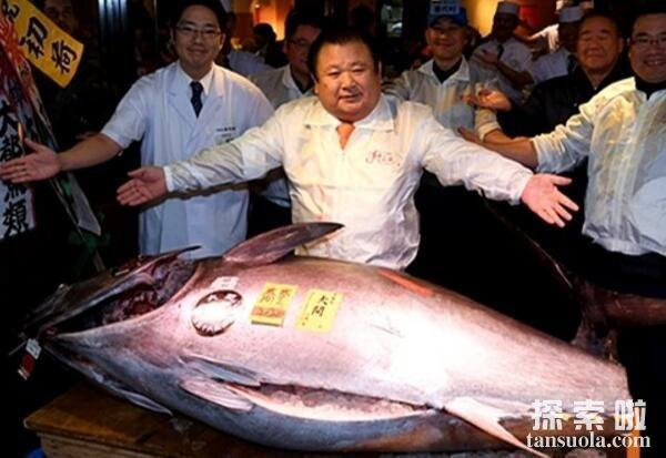 世界上最贵的食用鱼:金枪鱼,一条售价1190万人民币(图2)