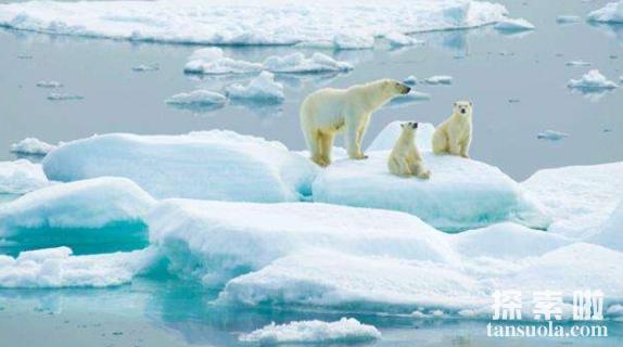 世界上面积最小的大洋:北冰洋,面积仅为太平洋的1/14(图1)