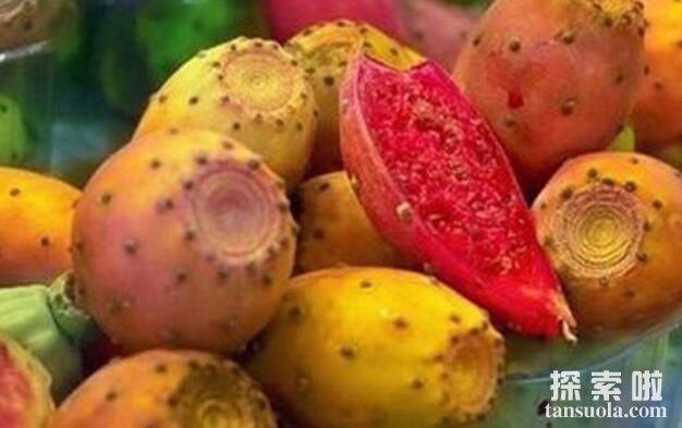仙人掌的果实能吃吗,食用型仙人掌但吃无妨(图3)