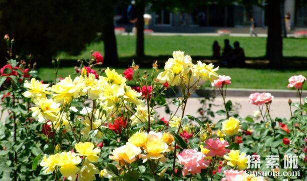 为什么植物的开花时间会不同?