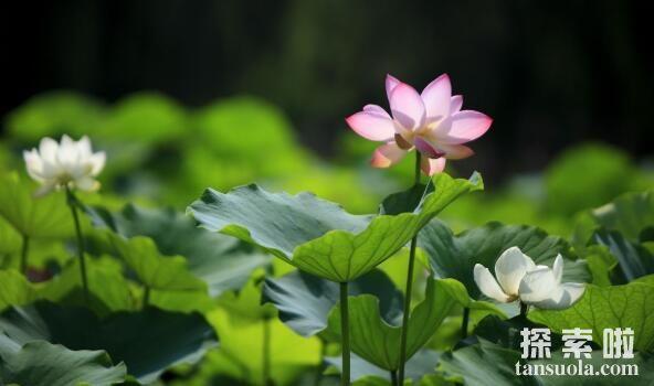 为什么植物的开花时间会不同?(图2)