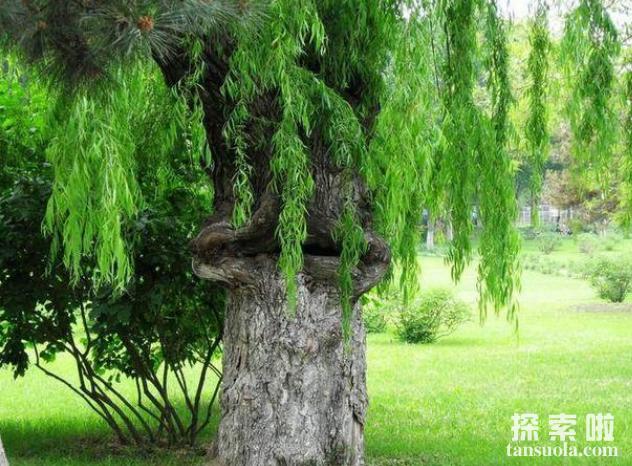 非洲吃人树真的会吃人,枝条如蛇,被缠住极难脱身(4)