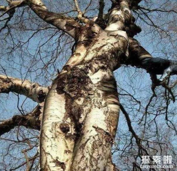 非洲吃人树真的会吃人,枝条如蛇,被缠住极难脱身(5)