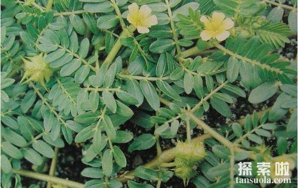 神奇的温血植物,花朵四季温度恒定不变(4)