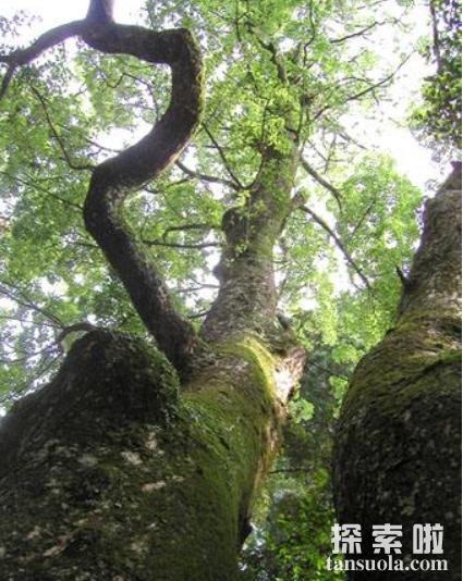 神奇的笑树,微风起时,笑声满园(3)