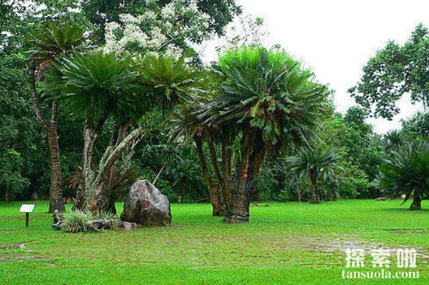 世界上生长最慢的树:尔威兹加树,100年仅长高30厘米(图1)