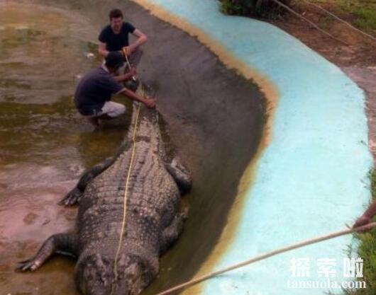 世界上最大的鳄鱼:菲律宾鳄鱼,体长6.4米,重1000公斤(图2)