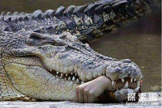 世界上最大的鳄鱼:菲律宾鳄鱼,体长6.4米,重1000公斤(图4)