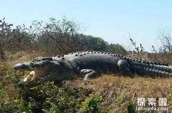 世界上最大的鳄鱼:菲律宾鳄鱼,体长6.4米,重1000公斤(图8)