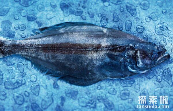 世界上最大的比目鱼,巨型比目鱼长2.6米重达468斤