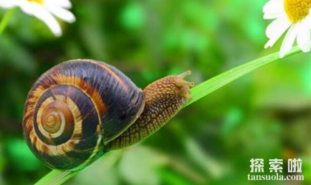 世界上牙齿最特别的十种动物,蜗牛竟然有上千颗牙齿