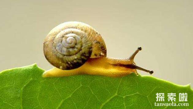 世界上牙齿最多的动物:蜗牛,超2万颗牙齿,满嘴都是牙