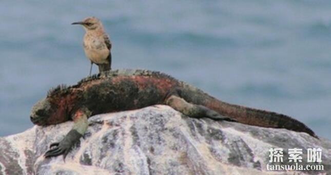 世界上表面温顺却凶猛的十种鸟,南极巨型海燕排名第一