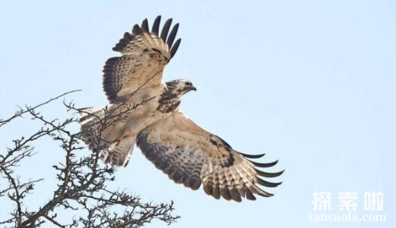 世界上最凶残的十种鸟,南方鹤鸵最美丽也最凶残