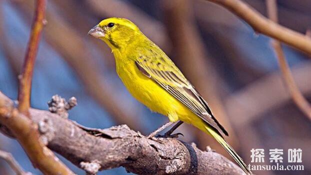 唱歌最好听的10种鸟排名,夜唱歌手夜莺排名第一