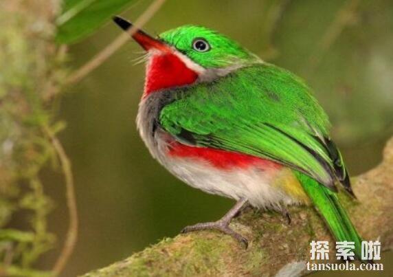 世界上最漂亮的鸟排行,北方皇家鶲酷似凤凰排行第一