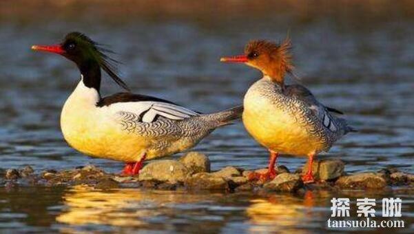 中国十大珍惜鸟类排行,祥瑞之鸟朱鹮排名第一