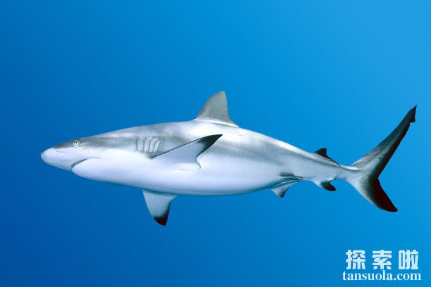 世界上最小的鲸鱼:小头鼠海豚,体长1.5米,预计2022年灭绝