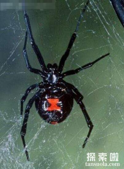 世界上最毒的蜘蛛排名,巴西游走蛛排名第一