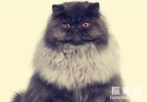 世界上最长寿命的猫:虎斑猫,活到了36岁的高龄