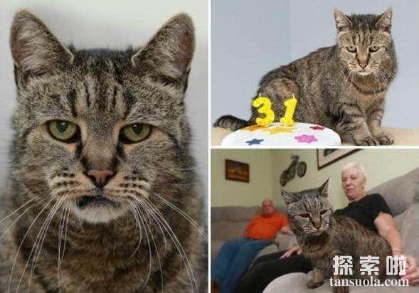 世界上年龄最大的猫:花斑家猫Sasha ,竟然活了141岁