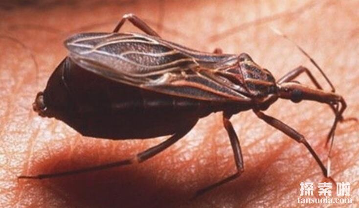 世界上最可怕的10种昆虫,噬魂金蝎排第一(致死率超高)