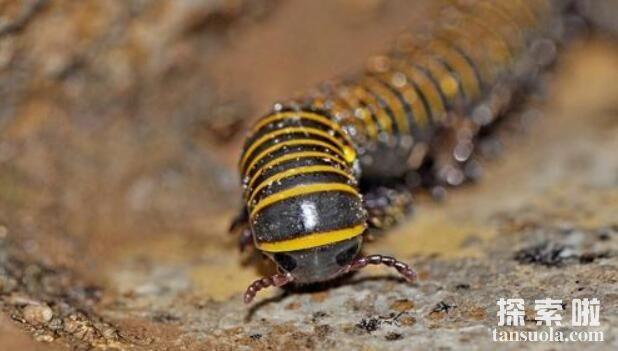 最不起眼的10大剧毒动物排行,鸡心螺毒性赛过蜈蚣