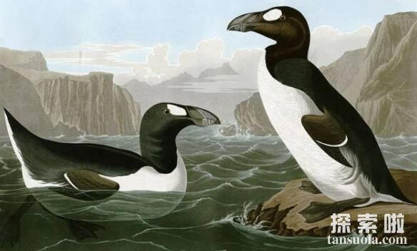 世界上已灭绝的鸟类排行,世界上灭绝的鸟类前十名