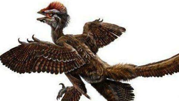 中国鸟龙:小型食肉恐龙,身长2米,有羽毛的恐龙