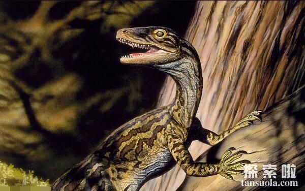 恐龙家族大灭绝_南十字龙:地球上最早的恐龙,一种距今2.25亿年前的恐龙 - 探索啦