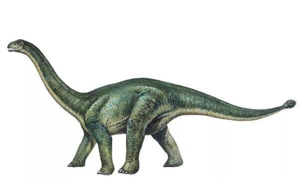 蜀龙:四川大型食草恐龙(长11米/性情温和)