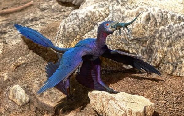 辽宁小盗龙:最小的食肉型恐龙(长0.56米/带羽毛的恐龙)