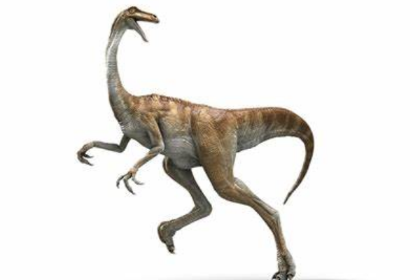 <a href=/tansuo/202009/2045.html target=_blank class=infotextkey>似鸡龙</a>:最大的似鸟类恐龙,不会飞的短跑小能手