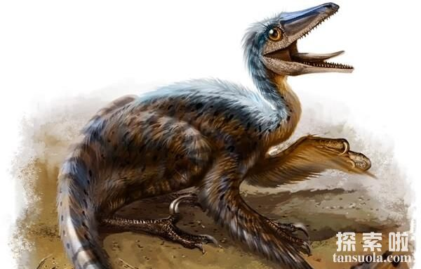 寐龙:小型食肉恐龙,化石在辽宁出土,体米1米