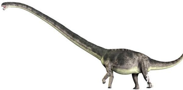 峨眉龙:中型长颈的蜥脚类恐龙(长21米/四川峨眉山出土)