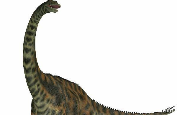 阿马格巨龙:阿根廷大型食草恐龙(长12米/早白垩世恐龙)