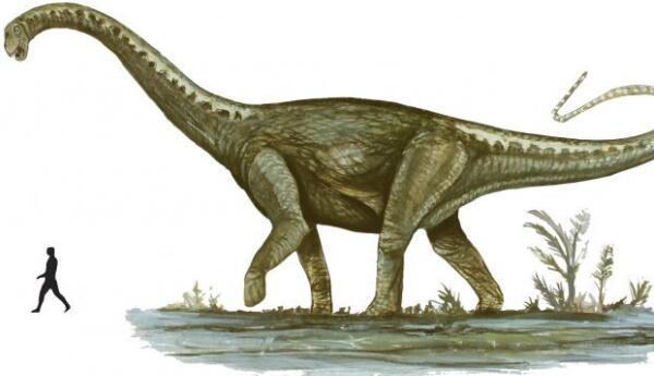 马拉圭龙:长有长脖子的大型四足恐龙,体长25米