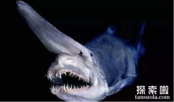 世界上最古老的鲨鱼:精灵鲨,200米深海下的隐形活化石