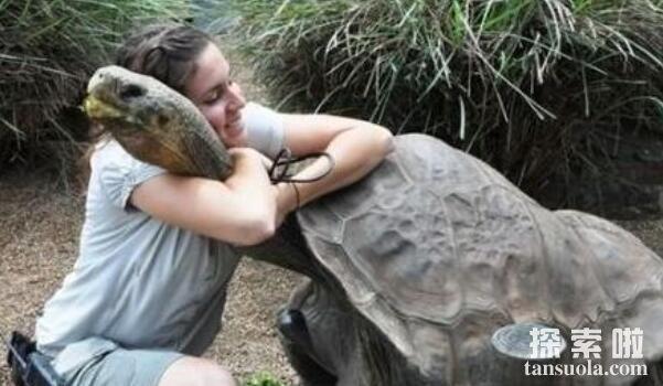 世界上最长寿的龟:哈里特乌龟,活了176岁(龟中寿星)