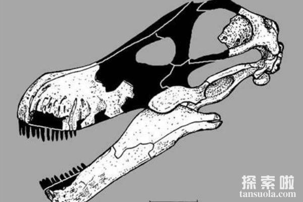 非凡龙:5层楼高的泰坦巨龙类恐龙,体长23米的巨型恐龙