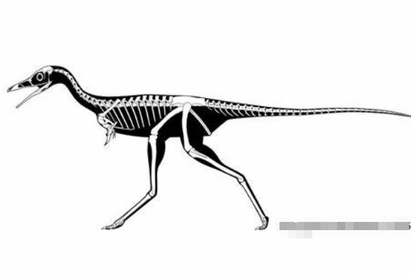 小驰龙:体型超级小的肉食恐龙(长1米/挖掘蚁巢觅食)
