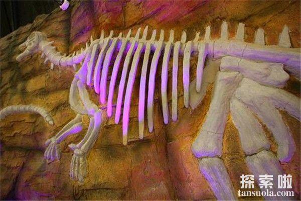 比霍尔龙:小型草食性恐龙(体长3米/缩小版的弯龙)