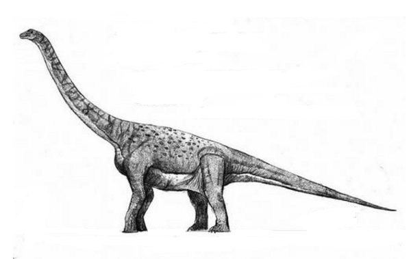 埃拉尔巨龙:脑袋小巧但躯干粗大的巨型恐龙(长30米/重数十吨)