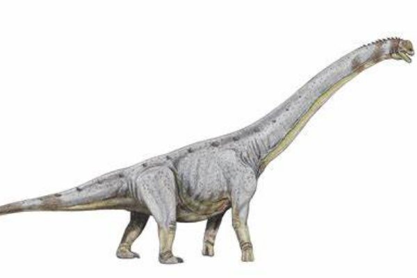 巴基龙:泰坦巨龙类恐龙,蜥脚类恐龙中最大最重的恐龙