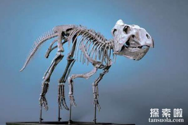 倾角龙:眼眶下长有三角形骨骼的恐龙,体长在1.8米左右